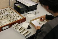 100,000 transcriptions and a roomful of molluscs #2