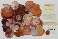 100,000 transcriptions and a roomful of molluscs #5