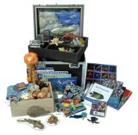 Museum in a Box - Sea Creatures