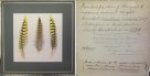 Mounted Night Parrot feathers and label