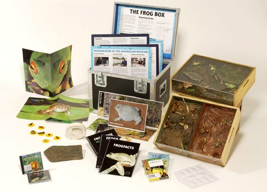 Museum in a Box - Frogs