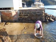 Sampling for marine worms