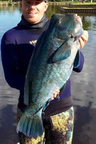 Bumphead Parrotfish from off Forster