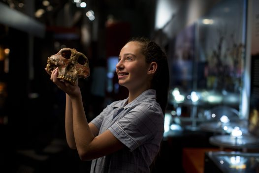 Student with early human skull