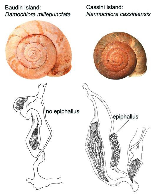 Same same but different – a taxonomic detective story - Australian ...
