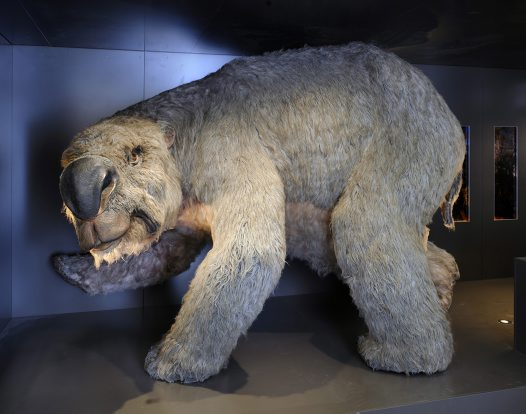 Diprotodon reconstruction