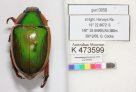 Coleoptera imaged by DigiVol