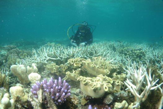Coral Bleaching On Lizard Island Update - Australian Museum-2713