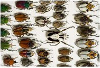 Beetles in the entomology collection