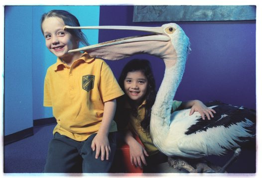 Students with pelican specimen