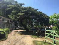 Rain Tree in Honiara, Solomon Islands