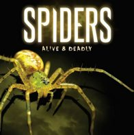 Spiders Exhibition – Alive & Deadly