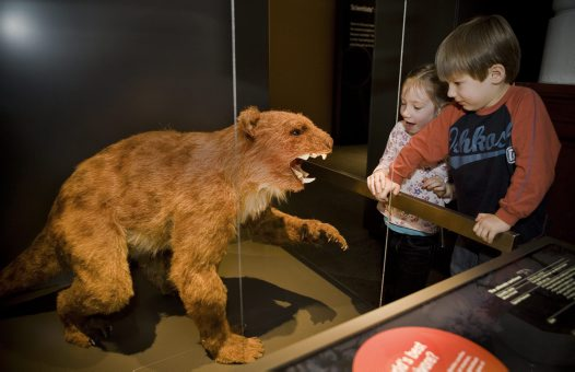 The marsupial lion