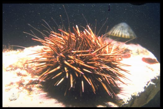 Sea Urchins, The - Please Don't Cry