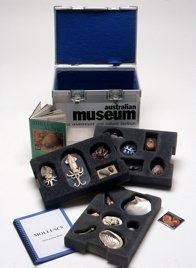 Museum in a Box - Snails, Slugs and squids