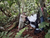 PhD student Josh Jenkins Shaw and Chris Reid erecting an insect trap on a 45º slope, Mount Lidgbird, Lord Howe Island.