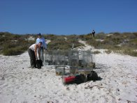 Tammar Wallaby traps on Abrolhos Islands, Western Australia
