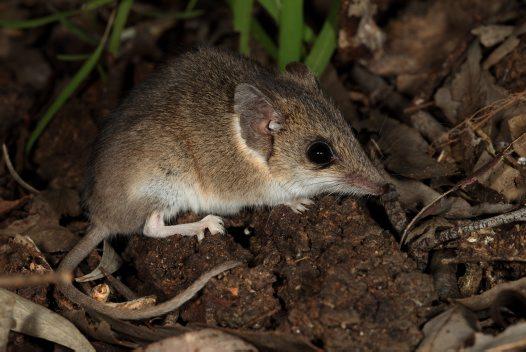 Australian Marsupial  Letters