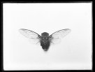 Anthony Musgrave, insect