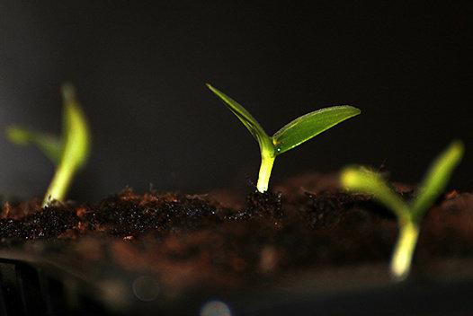 Seedling, Photographer: Kevin Doncaster