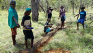 Yugul mangi Ranger Clarry Rogers (left) and Ngukurr Yangbala (young people) checking pitfall trap line for reptiles during a 2017 survey in SE Arnhem Land