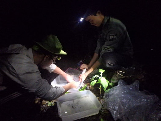 Fieldwork investigating the diet of frogs
