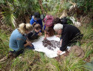 Chris Reid and citizen scientists looking at the contents of a sifter on Lord Howe Island