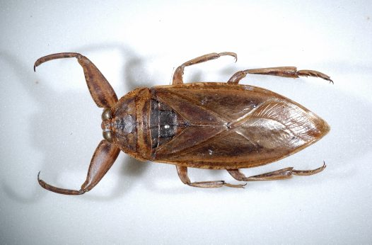 What Are Bed Bugs Attracted To