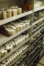 Shelves of small specimen jars