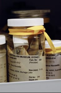 A typical jar in the fish collection
