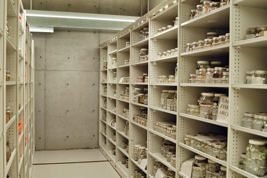 Fish Collection shelving units