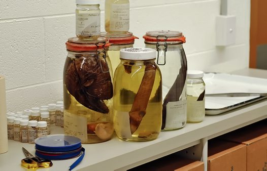 Specimens to be put away in the collection
