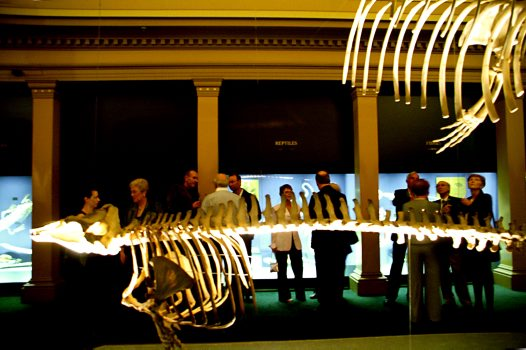 Skeleton Gallery - Whale