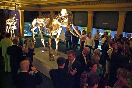 Skeleton Gallery - Elephant