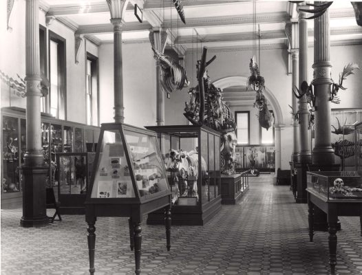 Skeleton Exhibition 1954