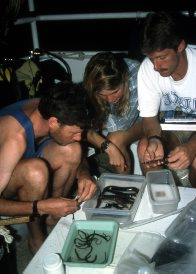 FNQ 1993 - sorting the catch