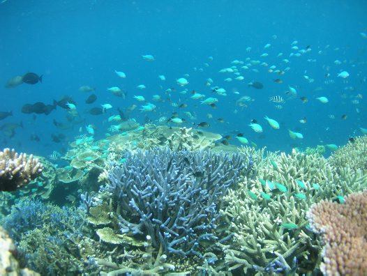 Beautiful reef at Lizard Island