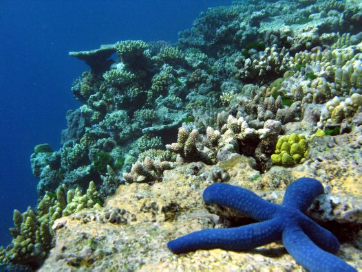 Lizard Island Surroundings 9