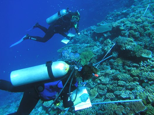 Diver collecting samples 7