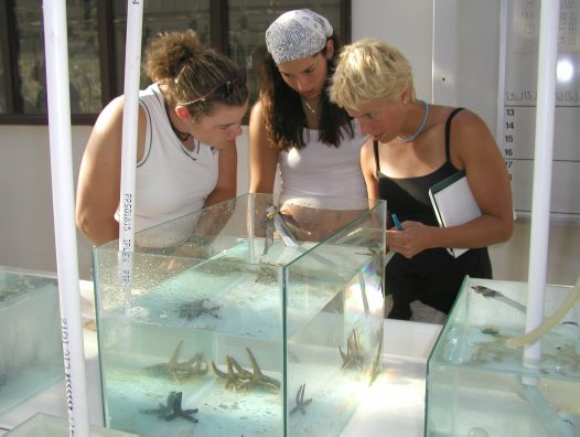 Lizard Island research student group