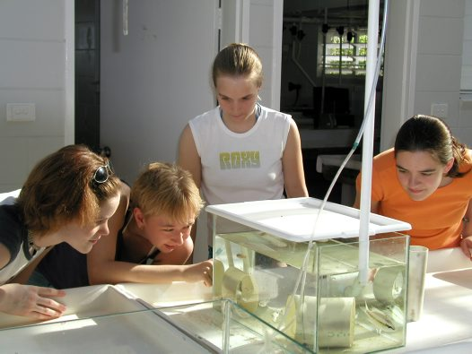 Lizard Island research student group 3