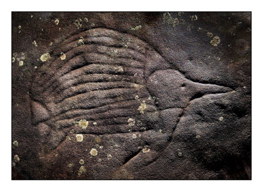 Aboriginal rock engraving of an echidna