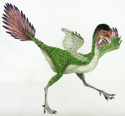 Skull of Homo erectus throws story of human evolution into disarray - Page 2 Caudipteryx_big