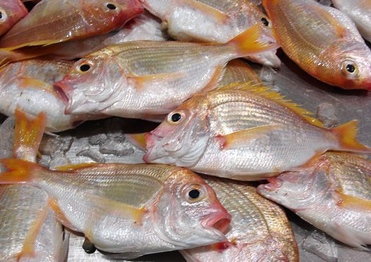 Commercially caught Yellowback Bream