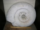 Impression fossil: ammonite, internal
