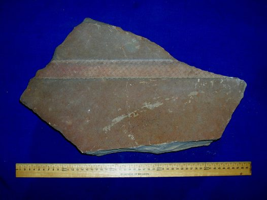 Impression fossil: bark, external