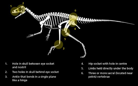 Physical features of dinosaurs
