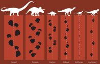 Comparing dinosaur footprints
