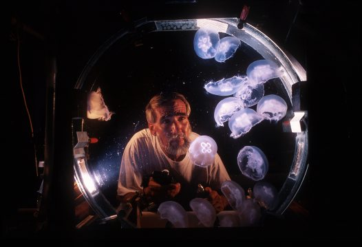 Peter Parks and moon jellies
