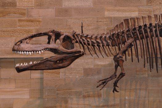 http://australianmuseum.net.au/Uploads/Images/8202/giotasaur_big.jpg